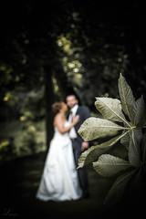it's wedding time. (Anna Haslwanter - Photography) Tags: wedding green nature photography leaf outdoor hochzeit brautpaar hochzeitsfotografie naturewedding sharpfuzzy
