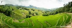 Ricefields Tavan, Vietnam (Bram van Leeuwen.net | Fotografie) Tags: asia southeastasia vietnam ricefields sapa azi tavan travelphotography reisfotografie bramvanleeuwen bramvanleeuwennet