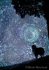 Starry Night (micahmoreland) Tags: fiction light dog reflection contrast artistic surreal science scifi mysterious sciencefiction