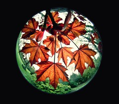 maple with diagonal fisheye lens (petr19710) Tags: flowers kilkenny ireland flower nature beautiful maple flickr sony sigma fisheye round alpha leafs f28 slt callan 6mm mtjuliet a57 sonyalpha excapture framedlife