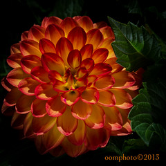 Happy Mother's Day ! (oomphoto) Tags: dahlia flower macro petals supersharp orangeandyellow nikond7000 bestevercompetitiongroup flowerthequietbeauty