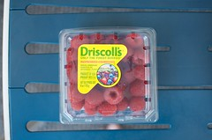 Driscoll's raspberries (Marisa | Food in Jars) Tags: strawberries raspberries blackberries blueberries berrytour driscollsberries berrybloggers