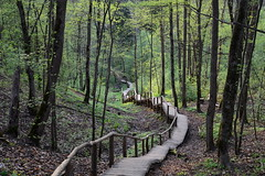 Stairs to unknown (Dmitry Kaminsky) Tags: tourism nature stairs spring latvia unknown abyss sigulda