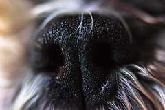 (EYECCD) Tags: dog detail macro nose diy saturated sniff flickrstock 550d