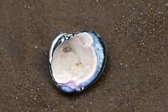 Lunar Shell and Stardust (Doug.Mall) Tags: sparkles sand shell ethereal macromondays dougmallnikond5000