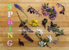 Spring (Lisa-S) Tags: ontario canada word spring lisas letters lilac forsythia cuttings brampton crabapple muscari invited grapehyacinth forgetmenots 7207 purplesandcherry copyright2013lisastokes getty2013 getty20130521