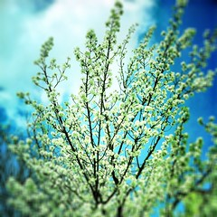 Spring's increase (robinrimbaud) Tags: london nature beautiful mobile handy spring portable phone scanner foliage robinrimbaud appleiphone iphone4 imageourtime