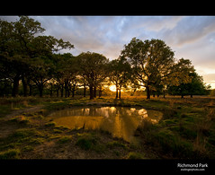 Richmond Park (esslingerphoto.com) Tags: road park greatbritain trees sunset england sky london wet water grass clouds landscape photography eos photo pond europe shot britain royal richmond single 5d cityoflondon mkii esslinger esslingerphotocom esslingerphoto