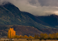 Autumn in New Zealand (Canterbury Region) (Robin Black Photography) Tags: trees light newzealand sky mist mountains fog clouds golden fallcolor ngc canterbury southisland naturesbest nationalgeographic outdoorphotographer canon5dmarkii robinblackphotography