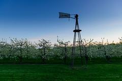 133/365: Orchard's Last Light. (Gregory Pleau) Tags: sunset ontario canada tree apple rural grove dusk farm orchard brampton