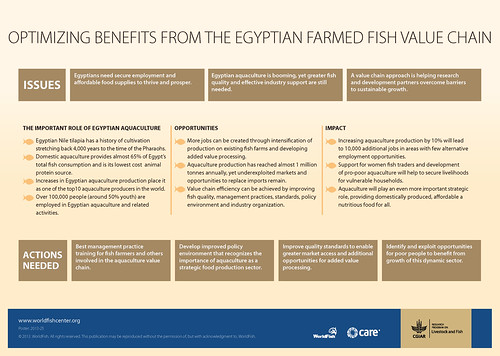 Optimizing benefits from the Egyptian farmed fish value chain