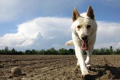 Cane gigante (giancarvedsse) Tags: cane perro bau giava