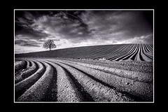 And So It Begins.... (RonnieLMills - 2 Million Views...Thank you All :)) Tags: road county ireland blackandwhite bw tree field mono nikon down lone northern 80 tamron furrows ploughed 1024 autofocus d90 comber greatphotographers theworldwelivein ostrellina alwaysexc mygearandme mygearandmepremium mygearandmebronze mygearandmesilver mygearandmegold mygearandmeplatinum mygearandmediamond ringexcellence greaterphotographers sunofgodphotographer dblringexcellence greatestphotographers tplringexcellence ultimatephotographers skancheli photographyforrecreationeliteclub eltringexcellence ballyrainey celebritiesofphotographyforrecreation photographyforrecreationclassic frameitlevel1 frameitlevel2 poty2014 infinitexposure