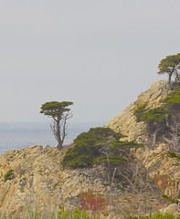 Cypress, Point Lobos (dianejp) Tags: california pointlobos cypresstrees
