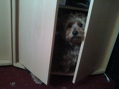 Found him in the cupboard looking for treats. (EllieRaineKnits) Tags: tigger