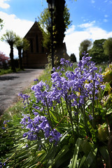 Photo of Bluebells in the churchyard, Liss, Hampshire retouched