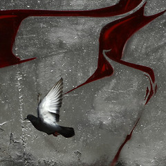 The Curse (Nicolas Riveil) Tags: street red white abstract bird art animal wall canon silver grey graffiti fly blood wings tag graf flight wing graph 1740 pidgeon