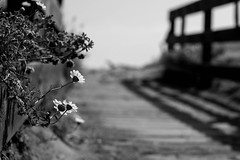 (AriannaP.) Tags: light bw white black flower roma nikon di mm 50 bianco nero luce lido