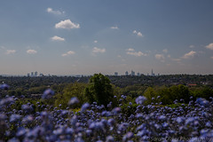 View over London from Alexandra Palace Park (SarahO44) Tags: park uk flowers blue london skyline ally view purple terrace south united north steps kingdom palace peoples alexandra wharf canary shard pally