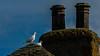 Dawko-2804.jpg (Dawko) Tags: birds dove rutland doves belton whitedove beltonhotgarden