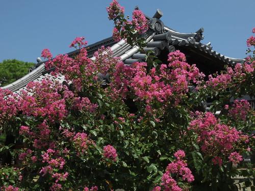 梅林寺の夏