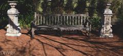 Tree's shadow. (W3155Y) Tags: wood old shadow sculpture brown white tree newcastle wooden vineyard bush chair sydney australia retro soil dirt hedge aged dull w3155y