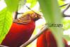 Sydney (Qicong Lin(Kenta)) Tags: bird animal sony sydney australia lin kenta qicong a55 悉尼 林奇聪 qiconglin シドニー オーストラリア