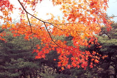 Korean Autumn (lilasyuri) Tags: autumn mountains tree leaves lanterne automne landscape asian temple scenery asia downtown korea du korean lanterns lantern campagne arbre tress province ville sud daegu monts core taegu