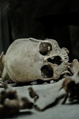 British Museum (LorenaDibs) Tags: london museum skeleton skull nikon british 1855 britishmuseum londra vr teschio scheletro d3000 nikond3000