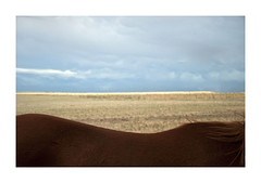 ... (Yago Slm) Tags: horse naturaleza color nature landscape caballo country paisaje verano campo elcampo2015