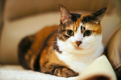 E Meow (Steve only) Tags: auto cats color reflex f14 sony 55mm m42 porst 5514 mitakon e nex3 lensturbo
