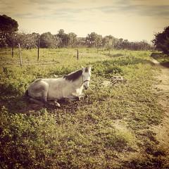 Buen domingo!  Good sunday! #nubes #clouds #caballo #horse (Canoso.) Tags: wild horses horse nature beautiful field grass square pretty farm riding pony jockey squareformat ponies horseshoe horseshow rider mane gallop riders photooftheday babyhorse earlybird ilovemyhorse iphoneography instagramapp uploaded:by=instagram instagood instahorses tagsforlikes horsesofinstagram horsestagram
