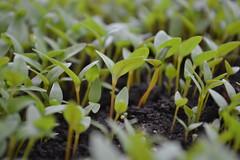 (Me siga que eu te sigo !!! Follow me I follow you!) Tags: plant verde green planta nature natureza