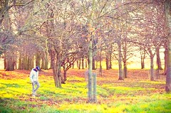 Walking in solitude (claudiofalasca96) Tags: park trees winter dublin green nature daylight solitude walk memories thoughts