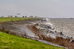 Storm, Lelystad NL (xsgraphicdesign) Tags: storm rain weather regen lelystad oostvaardersdijk