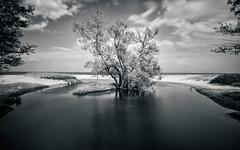 Verkan (claustral) Tags: longexposure bw tree beach water monochrome river island coast sweden baltic le scandinavia stersjn sterlen
