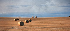 Bales (Across & Down) Tags: field evening spring manitoba bales prairies