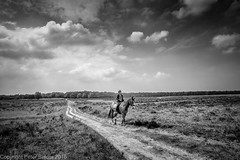 Baarn Lonely Rider (peterpj) Tags: bw horse landscape heather tokina rider heide landschap nikond800 silverefexpro2 baarnhilversumheidenikond800