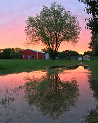 Morning Reflections (peppermcc) Tags: tree sunrise reflections texas redbarn
