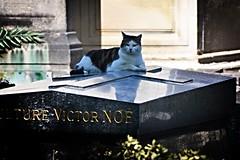Repos en paix. (Poulbot75) Tags: cat chat montmartre tombe