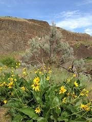 Palouse Falls 2016-05-05 - 10 (dierken) Tags: waterfall palouse palousefalls
