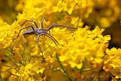 Spider (kinga.lubawa) Tags: flowers flower macro colors canon spider spring tamron kwiaty kwiat kolory pajk kolorowe sonecznie