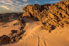 The Hideout (--Welby--) Tags: beach coast sand rocks dune crab australia western wa cave hermit broome hideaway