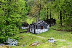 DSC_4457 (rayds2016 Photo) Tags: montagna lombardia varese nikond3200 borghi villaggi alpeggio montelema monteviasco valveddasca mulinidipiero nikonafsdx35mmf18g