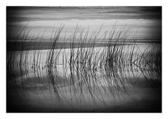 Reflexes (eduardo.mazzeo) Tags: bw monocromo monochrome beach winter wet reflexes seascape