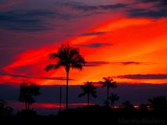 1233414_517083691700054_969241131_n (marcelomadeiramartins) Tags: sunset pordosol sky crepusculo ceu amazonia babau twiligth