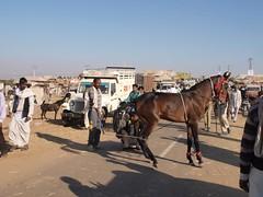 LJ197857 (jmputz) Tags: cheval pushkar