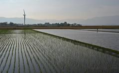 Tending paddy fields in east Biwa lake. (kaycatt*) Tags: japan landscape seasonal may windturbine paddyfield lakebiwa    wind power