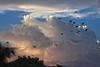 Flights of fancy (Rajib Singha) Tags: travel cloud india bird nature landscape interestingness outdoor monsoon vista westbengal hooghly canoneos40d flickriver sheoraphuli jupiter37a135mmf35lens