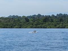 "Bahia de los Dolfines <a style=""margin-left:10px; font-size:0.8em;"" href=""http://www.flickr.com/photos/127723101@N04/27333302275/"" target=""_blank"">@flickr</a>"